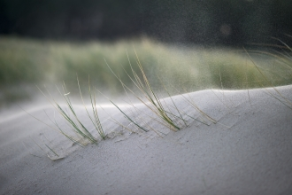 Wind blowing over dune grasses © David Tipling/2020VISION