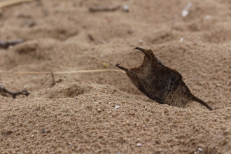 Eggcase in sand