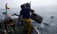 Fisherman hauling lobster pot onto his boat © Toby Roxburgh/2020VISION