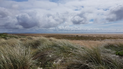 Fylde sand dunes near beach terrace