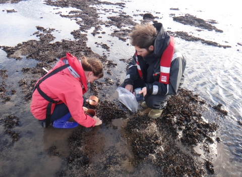 Sieving mussels on a mussel survey